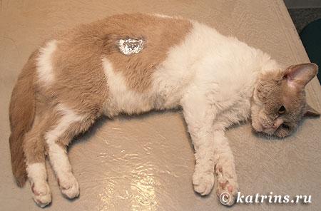 После операции по кастрации у котов