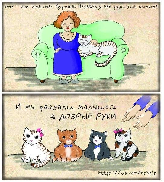 Обязательно ли котов кастрировать кота