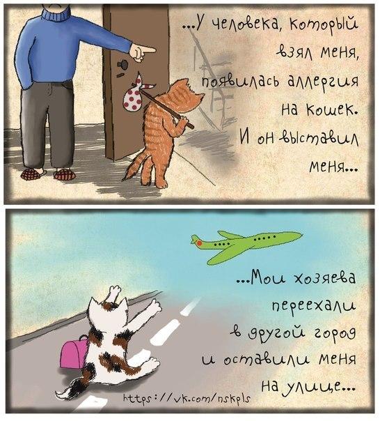 Что бывает с котами если их не кастрировать