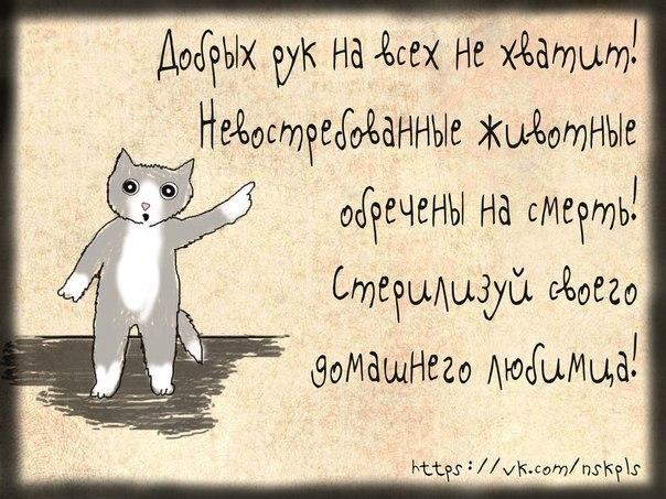 Katrin's Velimir